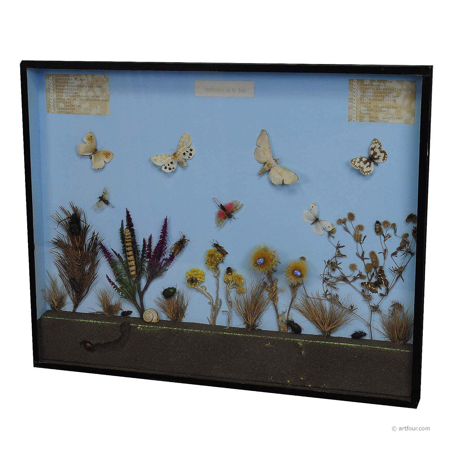 a great vintage school teaching display of the insects of the heath