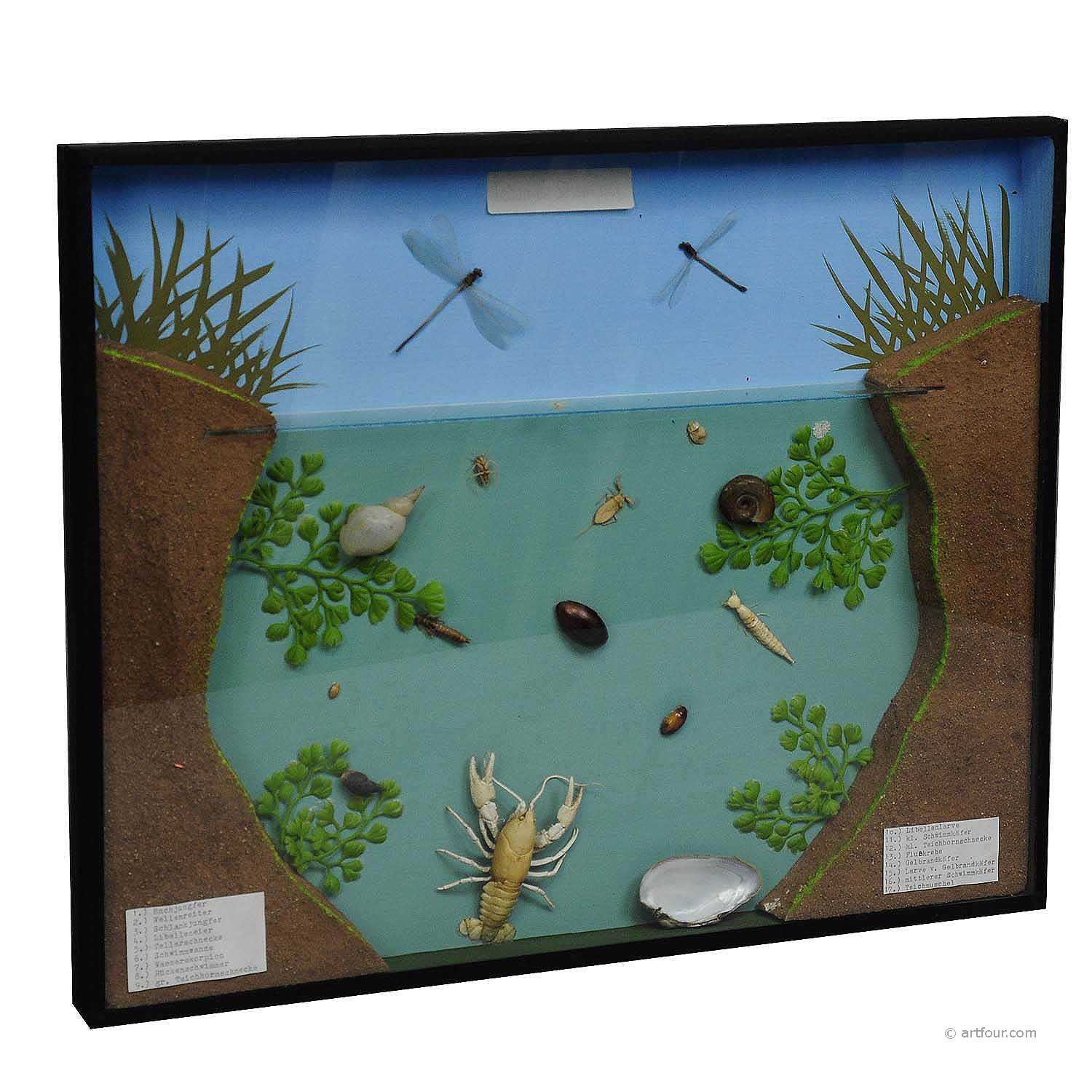 a great vintage school teaching display of the fresh water habitat