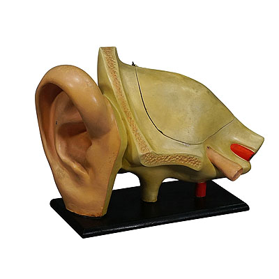 image of antique teaching aid modell of an ear - somso ca. 1900