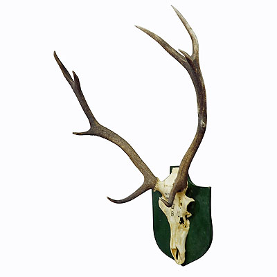 image of vintage black forest deer trophy from salem - germany, altenau 1956