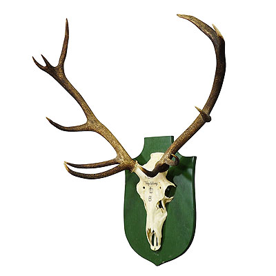 image of vintage black forest deer trophy from salem - germany 1959