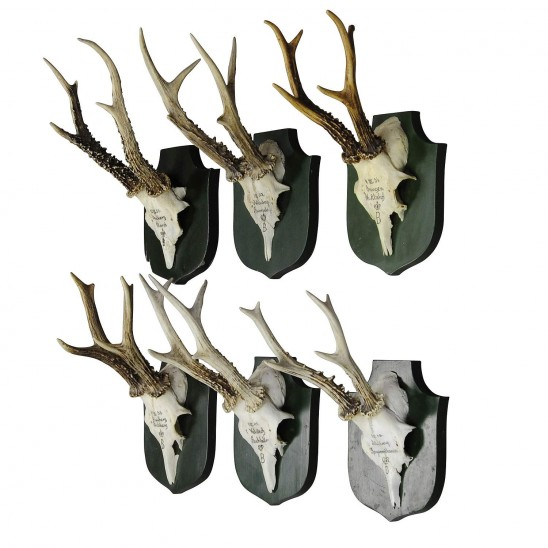 black forest deer trophies - a unique wall decoration